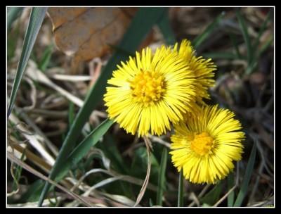 Jarní klišé
