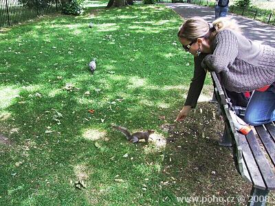 Krmení veverek