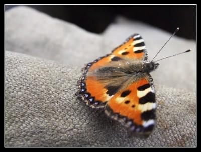 Motýl před odletem